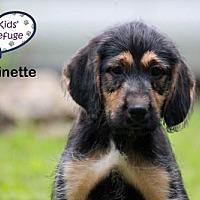 Adopt A Pet :: Antoinette - Lee's Summit, MO