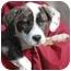 Photo 2 - Terrier (Unknown Type, Medium)/Basset Hound Mix Puppy for adoption in Wake Forest, North Carolina - Journey