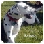 Photo 2 - Dalmatian Dog for adoption in Mandeville Canyon, California - Missy II