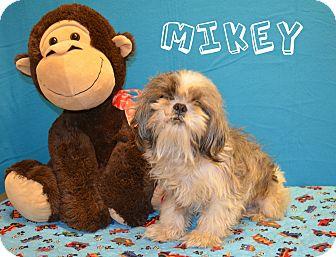 Shih Tzu Dog for adoption in Laplace, Louisiana - Mikey