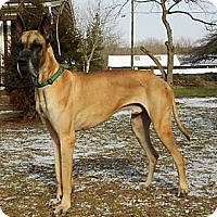 Adopt A Pet :: Buster - Pearl River, NY