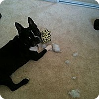 Adopt A Pet :: Teddy - North Hollywood, CA
