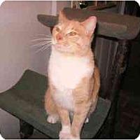 Adopt A Pet :: Reesie - Colmar, PA