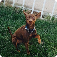 Adopt A Pet :: Sonny - Oceanside, CA