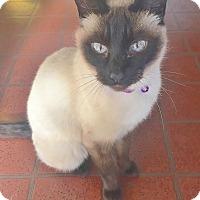Adopt A Pet :: Maisie - Davis, CA