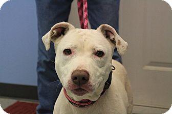 Terrier (Unknown Type, Medium) Mix Dog for adoption in Martinsville, Indiana - Pink