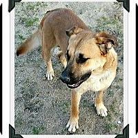 Adopt A Pet :: Shannon - Rancho Cucamonga, CA