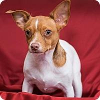 Adopt A Pet :: Buster Posey - Lodi, CA