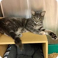 Adopt A Pet :: Jangles - Colmar, PA