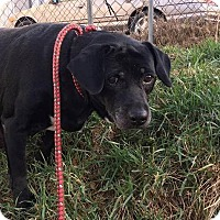 Adopt A Pet :: Hinny - Buckeystown, MD