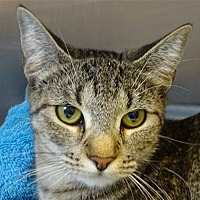Adopt A Pet :: Emerald - Corpus Christi, TX