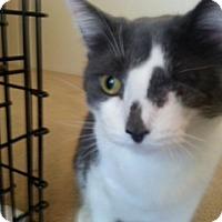 Adopt A Pet :: Momma Mia - Sylvan Lake, MI