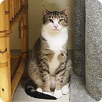Adopt A Pet :: Buoy - Ocean City, NJ