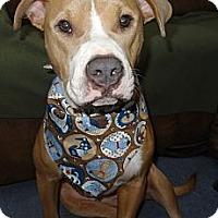 Adopt A Pet :: Hope-URGENT!!! - Hadley, MI
