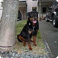 Adopt A Pet :: Cory - Surrey, BC