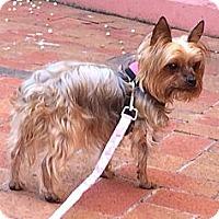Adopt A Pet :: Linda - Fairfax, VA