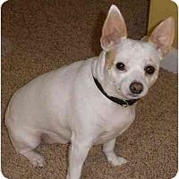 Adopt A Pet :: Petey - Suffolk, VA