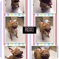 Adopt A Pet :: Roxi - Alliance, NE