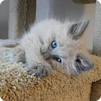 Adopt A Pet :: Alfie - Davis, CA