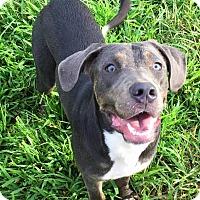 Adopt A Pet :: Pretzel - Russellville, KY