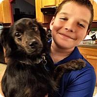 Adopt A Pet :: Buddy - New Smyrna Beach, FL