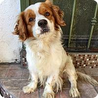 Adopt A Pet :: Elton - Santa Ana, CA