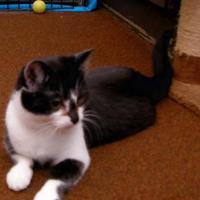 Adopt A Pet :: Baby - Salem, OH