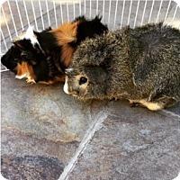 Adopt A Pet :: Charlie & Tyler - Fullerton, CA