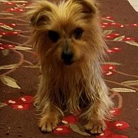 Adopt A Pet :: KonaRae - Spring, TX