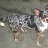 Adopt A Pet :: Stormy - Bonifay, FL