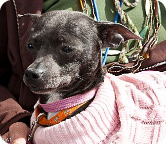 Mexican Hairless Mix Dog for adoption in Loudonville, New York - Yum Yum