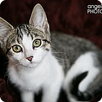 Adopt A Pet :: Lincoln - Eagan, MN