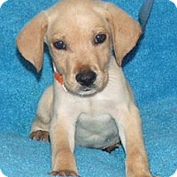 Adopt A Pet :: Abe - Phillips, WI