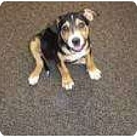 Adopt A Pet :: Rosco (pending adoption) - Adamsville, TN