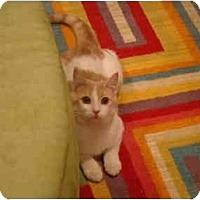 Adopt A Pet :: Eros--PETSMART - Muncie, IN
