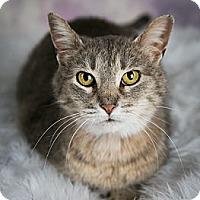 Adopt A Pet :: Brinleigh - Eagan, MN