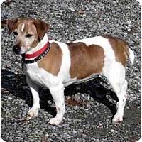 Adopt A Pet :: Gidget - Rhinebeck, NY