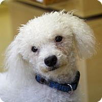Adopt A Pet :: Louie - Rigaud, QC