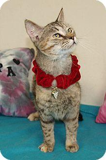 Domestic Shorthair Cat for adoption in Jackson, Mississippi - Sahara