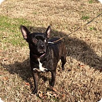 Adopt A Pet :: Sasha - Arlington, TN