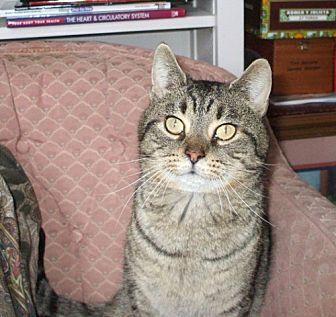 Domestic Mediumhair Cat for adoption in Columbus, Ohio - Terrance