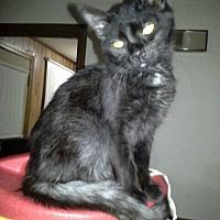 Adopt A Pet :: Willie - Albemarle, NC