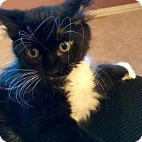 Adopt A Pet :: Talia - Dallas, TX