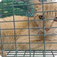 Adopt A Pet :: A503766 - San Bernardino, CA