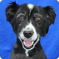 Adopt A Pet :: Spud - Pagosa Springs, CO