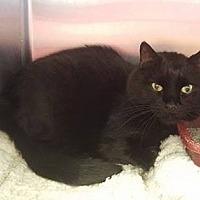 Adopt A Pet :: Bear 1604 - Alva, OK