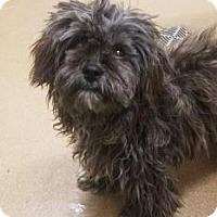 Adopt A Pet :: Suzie #168238 - Apple Valley, CA
