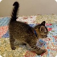Adopt A Pet :: Starky - Geneseo, IL