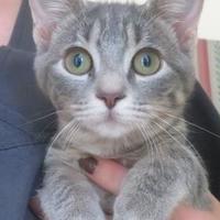 Adopt A Pet :: Honey Lemon - Menomonie, WI