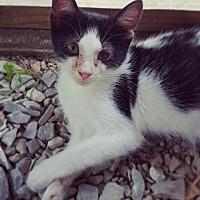Adopt A Pet :: Emmett - Taylorsville, IN